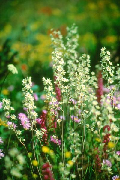 amh FLOWERS (1106).jpg
