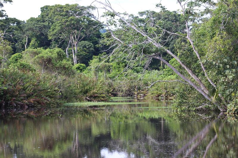 Río Suarez Creek