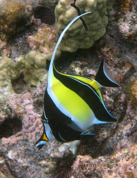 523- 20080416- Hawaii 20-Snorkelling IMG_0783.jpg