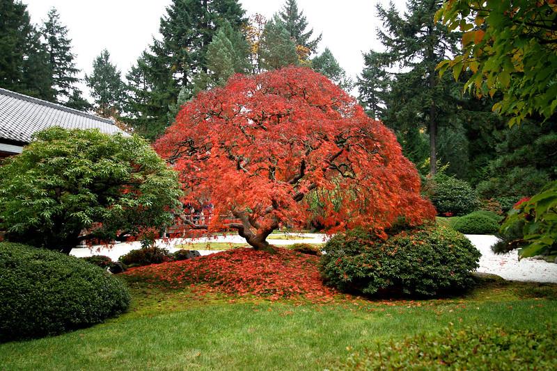 Portland Japanese Garden  11-11-11  3551.jpg
