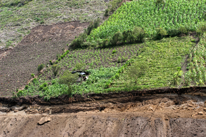 Ecuadorian farmers don't let any soil go unused.  If it isn't completely vertical, they'll farm it.