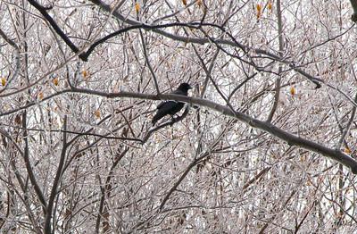 February 2 2011 Ice storm