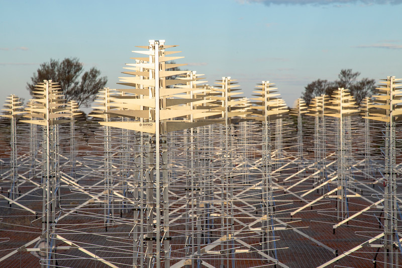 SKALA 4.1 antennas of the Aperture Array Verification System station. Credit: ICRAR/Curtin