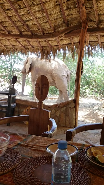 Elephant videos and pictures east African  safari 2018