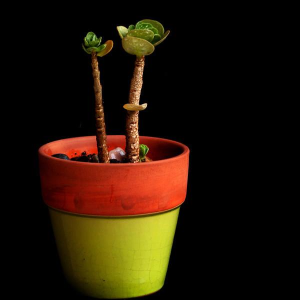 succulent 062720--2.jpg