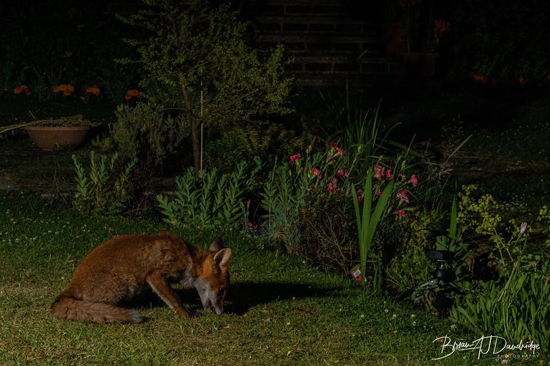 Garden Night Shoot-7275.jpg