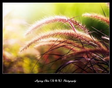 unknown flower-47