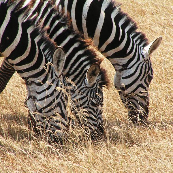 PICT0123_Ngorongoro_upr1b.jpg