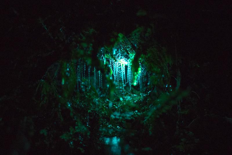 glowworm best-1.jpg