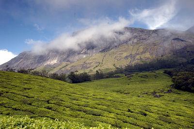 Kerala - Munnar