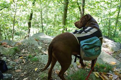 Wissahickon Hike