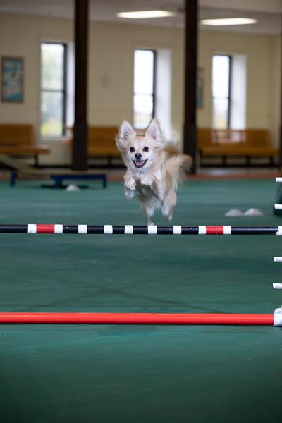SPCA_Agility-10.jpg