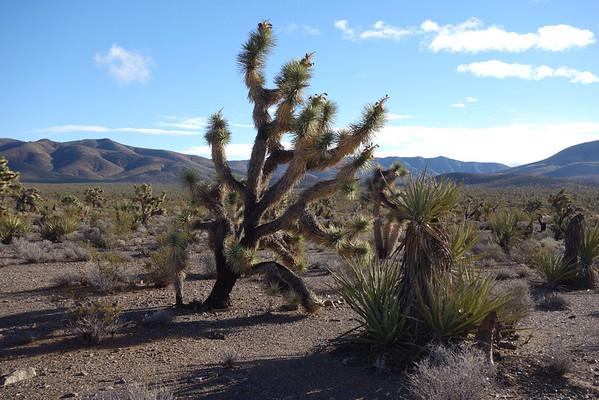 Mesquite Mountains High Point (Peak 5,160) - Nov 24, 2013