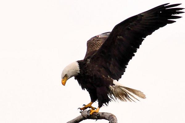 Baytown Bald Eagles on Friday, 020510