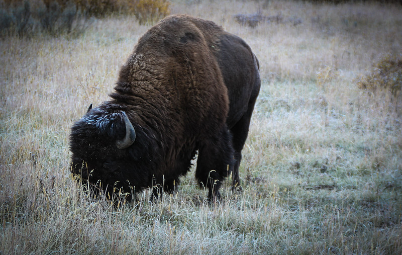 Fall Trip Wyoming & Montana 2016 (23 of 193).jpg