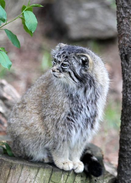 Cheyenne Mtn Zoo (198).JPG