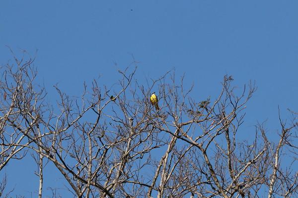 Wed 1/23/19 Birding