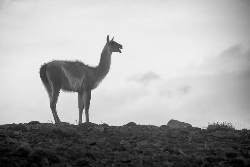 patagonia-1163.jpg