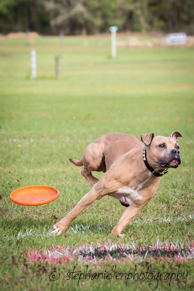 _MG_2520Up_dog_International_2016_StephaniellenPhotography.jpg