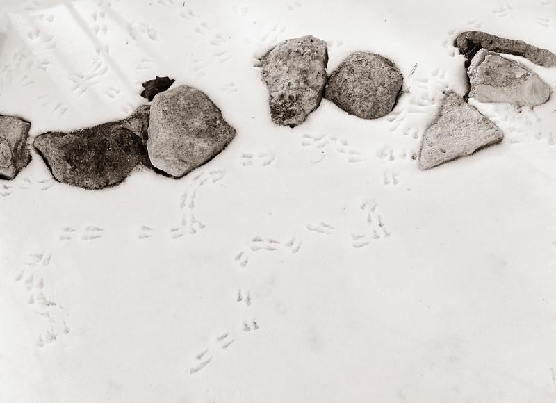 2021-02-15 Snow Rocks and bird tracks_DSF0497.jpg