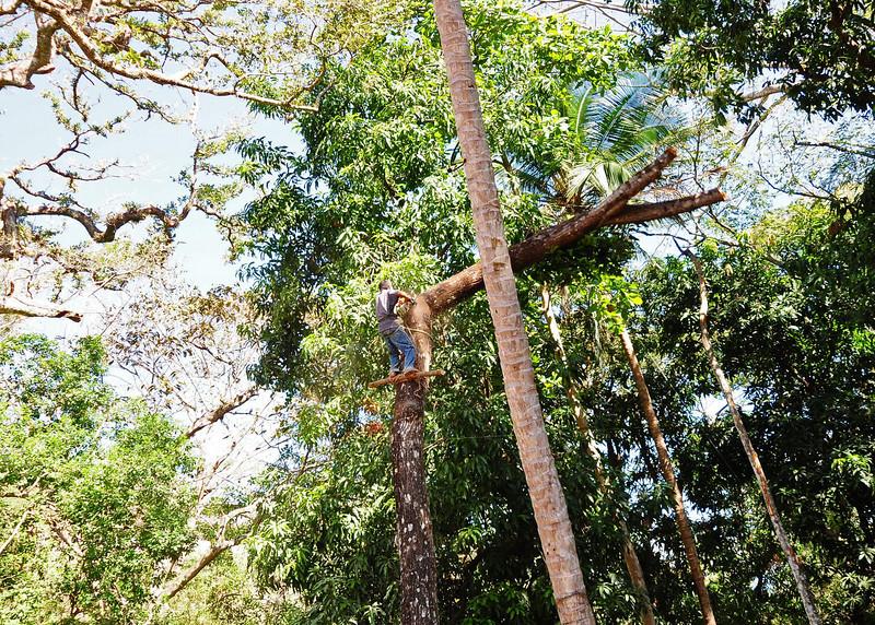 NEA_4883-7x5-Cutting Tree.jpg