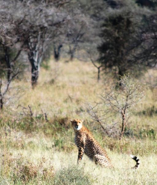 Serengeti (133).JPG
