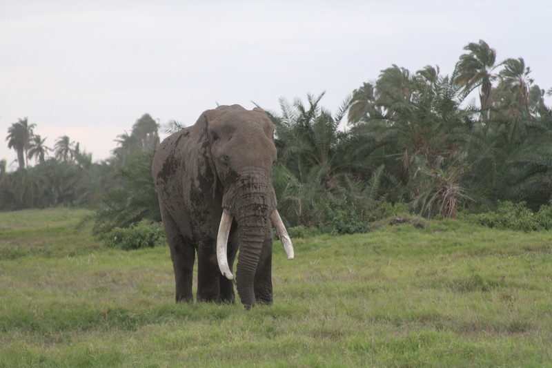 Kenya 2019 #2 1474.JPG