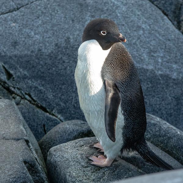 2019_01_Antarktis_05077.jpg