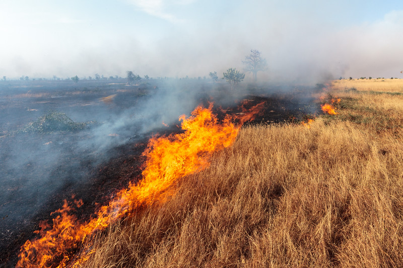 Every year, thousands of wildfires burn across the arid grasslands of the Sahel. Some fires are ignited by lightning strikes, but they are also actively used to convert land for agriculture. Here, a wildfire stretching several kilometers rushes across grassland near Khelcom, Senegal, driven by strong wind.