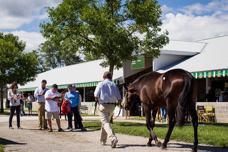 Buyers, Consigners and Workers at the Keeneland Select Sales 9.08.2012