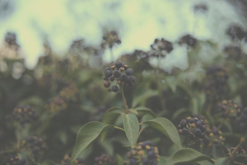 Farm Artdeson Garden