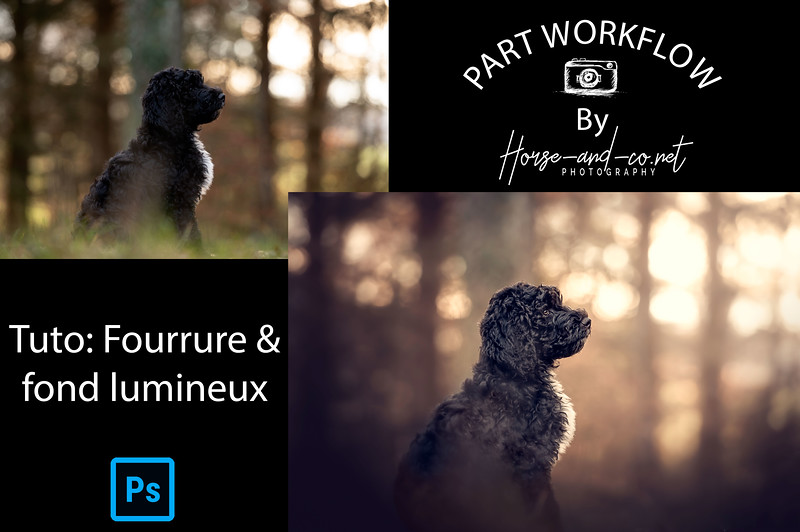 Part-WF-Fourrure-Début.jpg