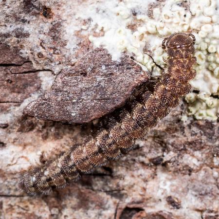 Unidentified millipedes