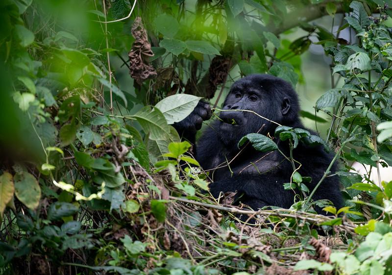 Uganda_T_Gor-2143.jpg