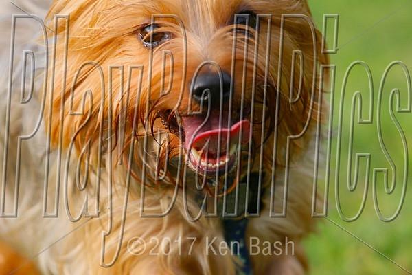 Springville Dog Park 7/20/13