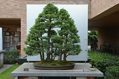 Japanese Gardens at CBG