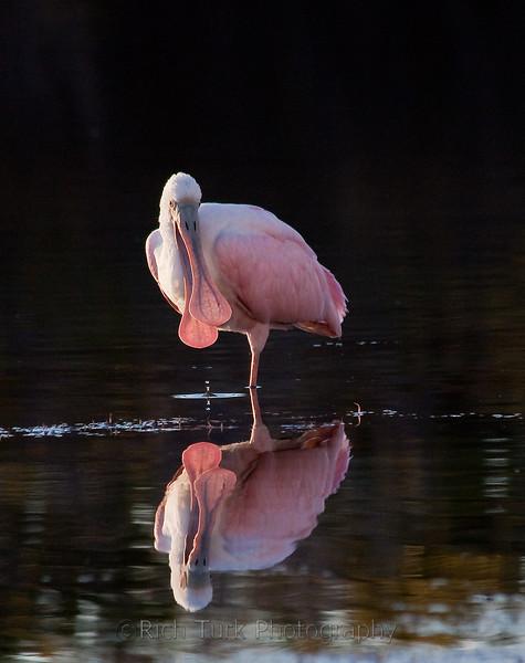 Florida Wading Birds