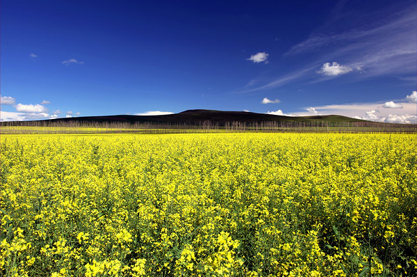 Grassland of HulunBeiEr, China-Russia border 呼伦贝尔大草原