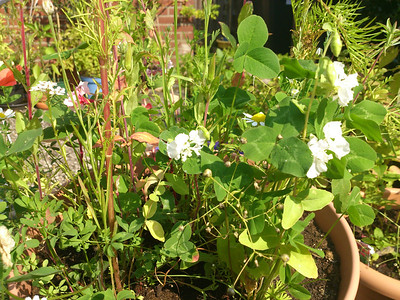 Wilde bloemen mengsel