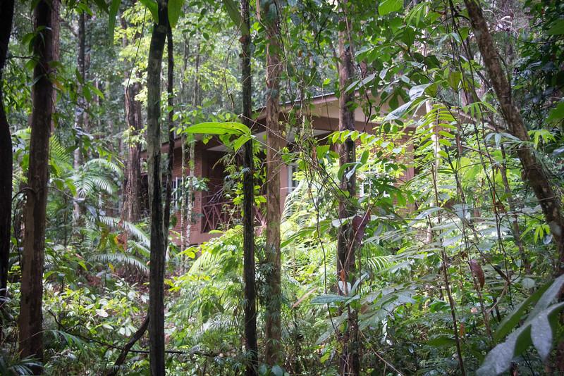 Borneo-2014-209.jpg
