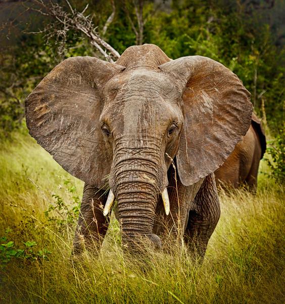 Kruger Elephants & Rhinos