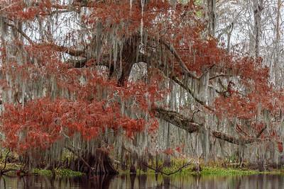 Louisiana 2019