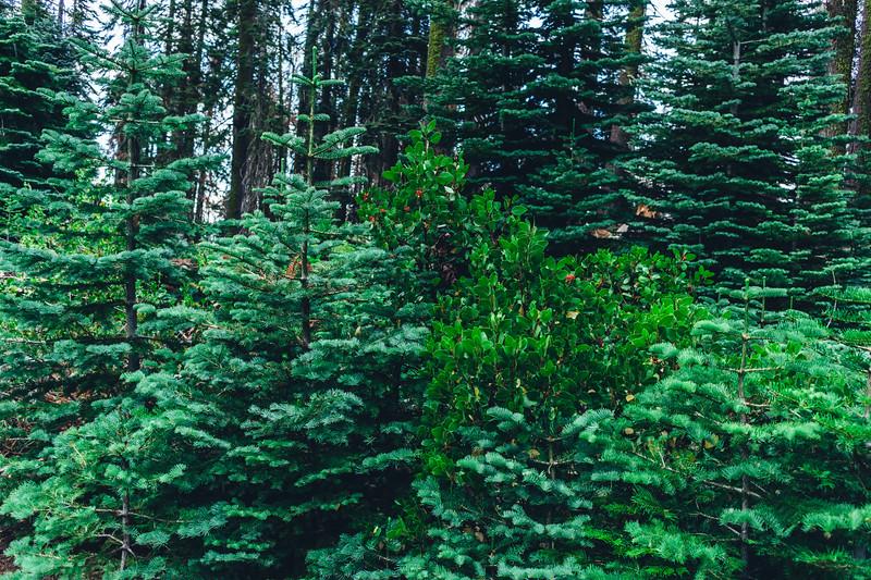 Rui in Sequoia-06956.jpg