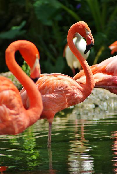 #26 Two Flamingos.JPG