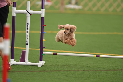 Berks County DTC AKC Agility Trial October 10-11