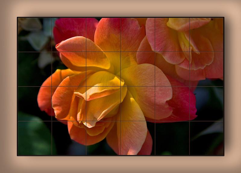 Peach Rose 24 piece Mural.jpg