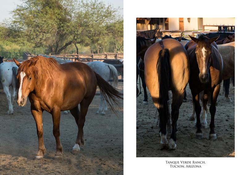 Horses 2 image set.jpg
