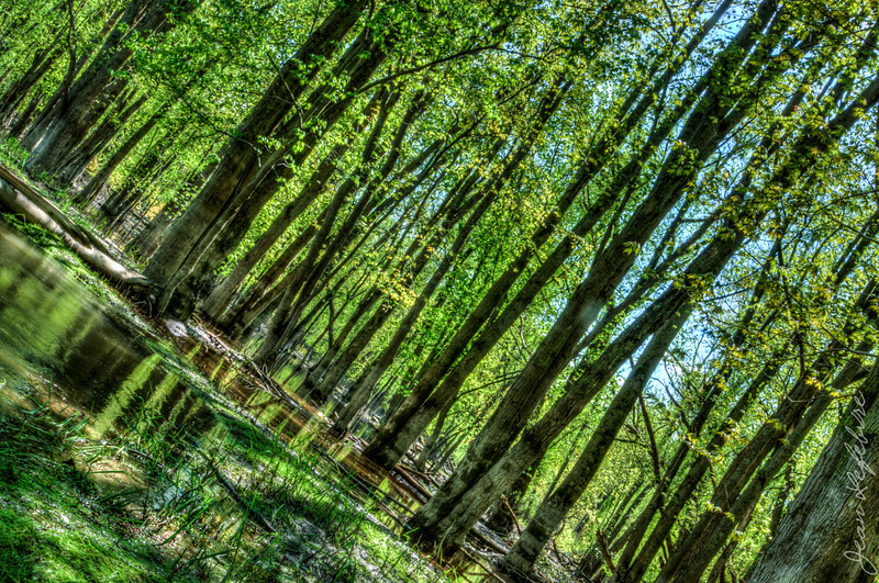 Minesing_Swamp_May2013 (254 of 263)_HDR