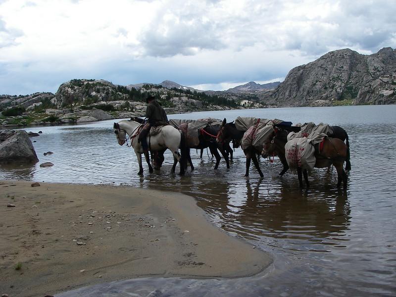 Thirsty horses.