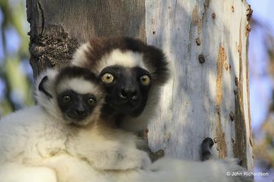 Madagascar - 2010